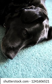 Black Dog Eyes