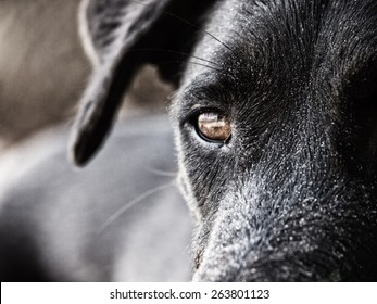 black dog face close-up, with sand at the beach