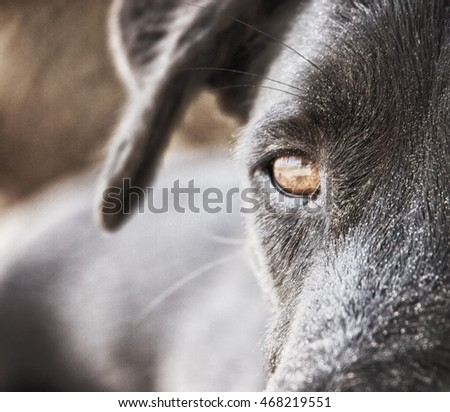 black dog face close-up with sand at the beach
