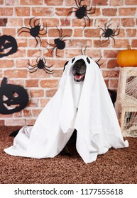 Black dog in ghost costume