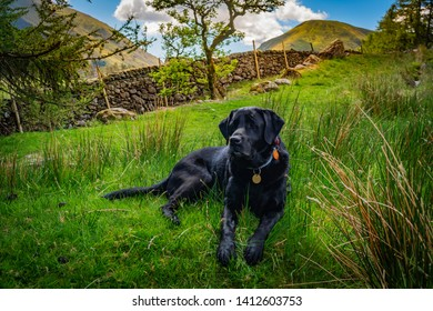 Black dog Labrador Retriever is resting on the green grass in a beautiful valley in Lake District mountains, the day is sunny with blue sky