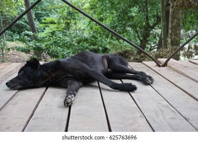 a black dog lay on a bridge