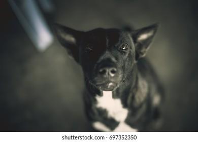 Black dog looking.