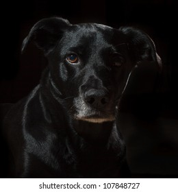 A black dog on a black background with accents of light and shadow