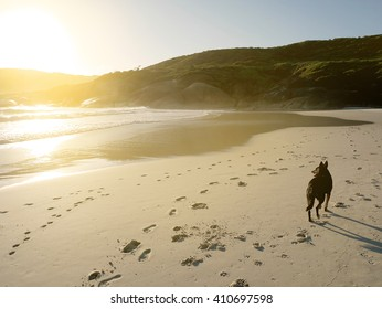 Black dog on the beach looking at the sea in evening light