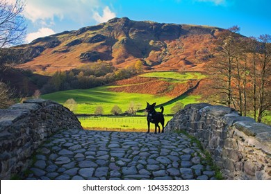 Black dog on cobbled bridge with views of hills and countryside. Background blue sky, lush green fields.  Borrowdale Valley,  Lake District National Park,  England, uk