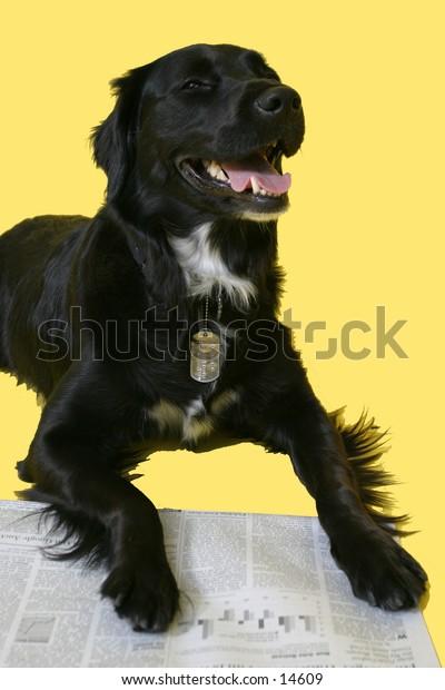 black dog on floor with newspaper