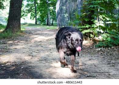 Black dog on the nature
