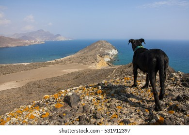black dog overlooking the beaches and cliffs of the southern Spanish coast, Andalusia