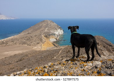 black dog overlooking beautiful hidden little beaches between rocky mountains and cliffs in southern Spain, Andalusia