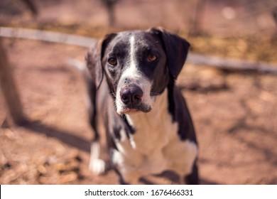 black dog with pity eyes.