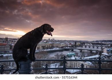 Black dog posing on handrail above river Vltava in Prague.
