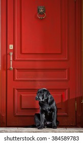 The black dog at the red door