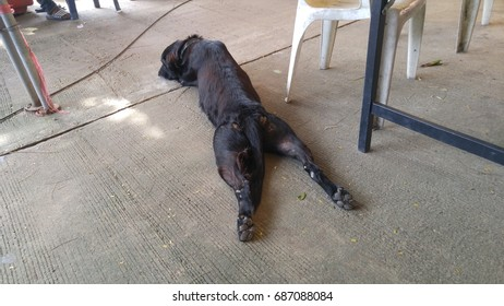 Black dog relax on the floor.