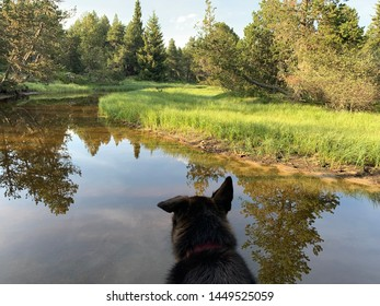 Black dog in a river in French Pyrenees forest landscape