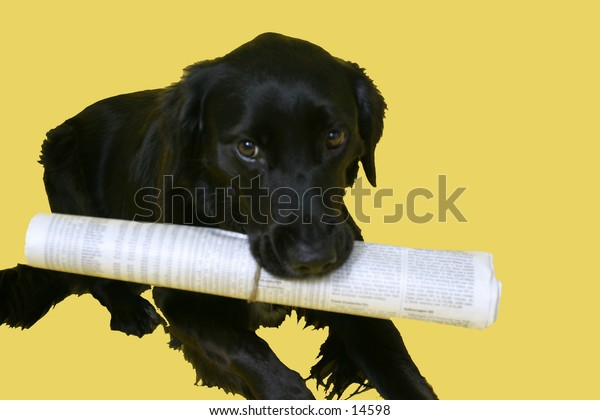 black dog with rolled up newspaper