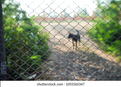 Black dog shadow outside the steel door, rabies prevention, banning dogs from the outside into the house.