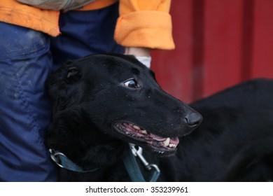 Black dog - shelter