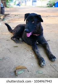black dog sit on the ground