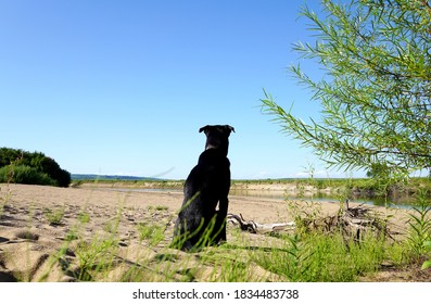 Black dog thoughtfully sits with his back against the background of a beautiful river