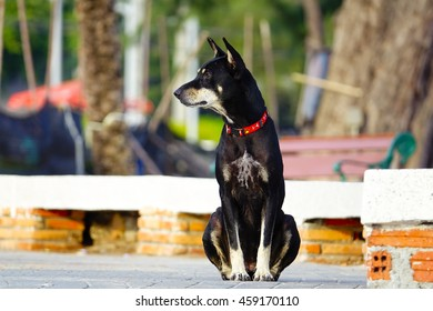 black dog sits on concrete floor with blurry background,select focus with shallow depth of field