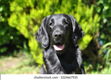 Black dog sitting in sunshine with blurred green background