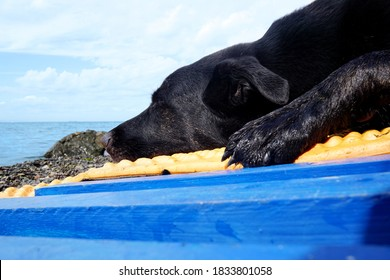 Black dog sleeping on a blue pallet against the backdrop of a seascape. An aquamarine pallet stands on a pebble shore. Russia