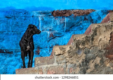 Black dog waiting on stairs in front of blue wall