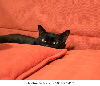 Black domestic cat lying on red sofa and looking mischievously over the pillows