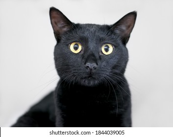 A black domestic shorthair cat with yellow eyes and dilated pupils