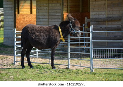 Black Donkey Relaxing at the Stables