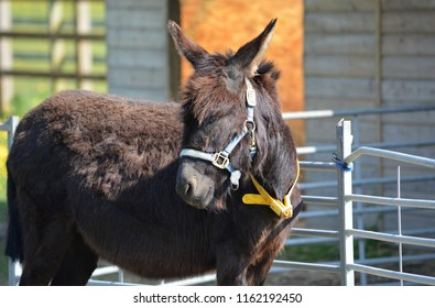 Black DonkeyTurning Heads at the Stables