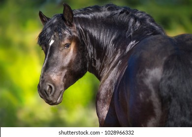 Black draft horse portrait on green background