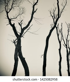 Black dried and dead trees with sky background photo