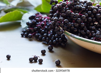 Black elderberries, Sambucus nigra, in enamel bowl with leaves on metal background. Copy space, selective focus, close up, back lit