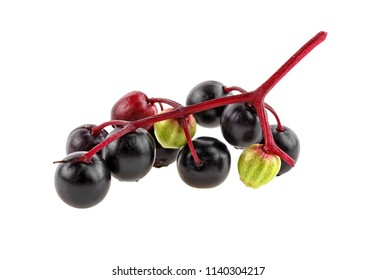 Black elderberry fresh fruit isolated on white background