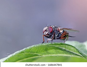 Black european housefly (Musca domestica) standing on a green leaf of a domestic house plant in a sunny day isolated from the blurred background.