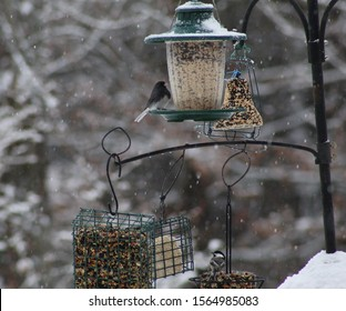 A black eye Junco and a small Chicadee perched on seed feeders and suet doughnut hanging off a multiple shepherd hooks and snow covered branches in background