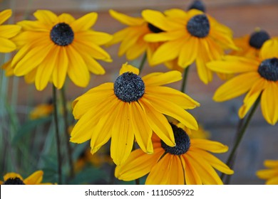 Black Eyed Susan flowers on a porch of a Lake Chelan lake house.
