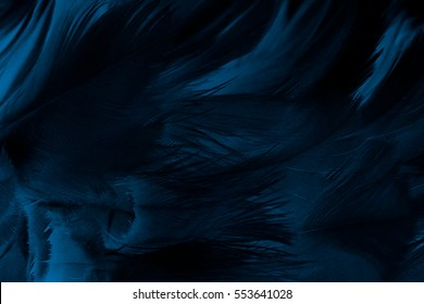 black feather abstract background