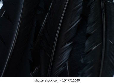 black feather background