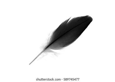 black  feather on white background
