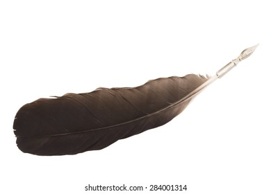 Black feather pen isolated