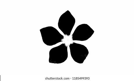 Black  flower isolated on white background.