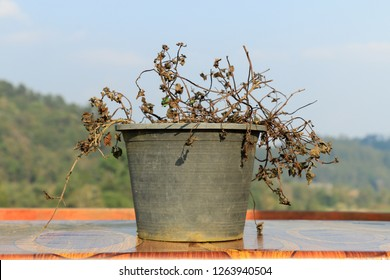Black flowerpots and trees withered, keep the key under a flowerpot