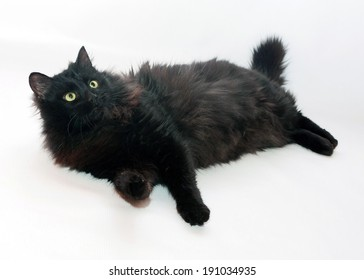 Black fluffy cat lies on gray background