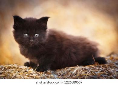 Black fluffy kitten outdoor in summer