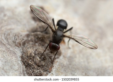 Black fly on deciduous wood photographed with high magnification