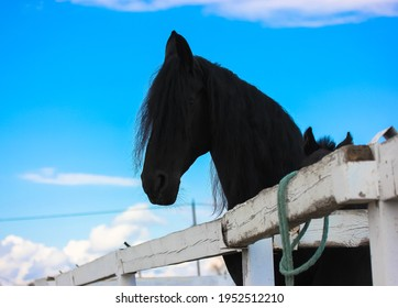 A black foal with a raven mother horse in a pasture. A little horse is standing near his mother at the racetrack. Farm animals in a corral at a cloudy summer or spring day against bright blue sky.