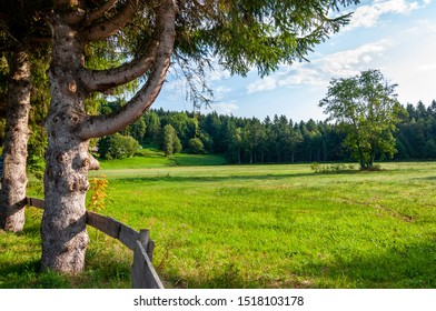 Black Forest in Bavaria, Germany. The meadows and woods around Lake Titisee. Immersed in unspoilt nature between mountains, forests and enchanting countries.